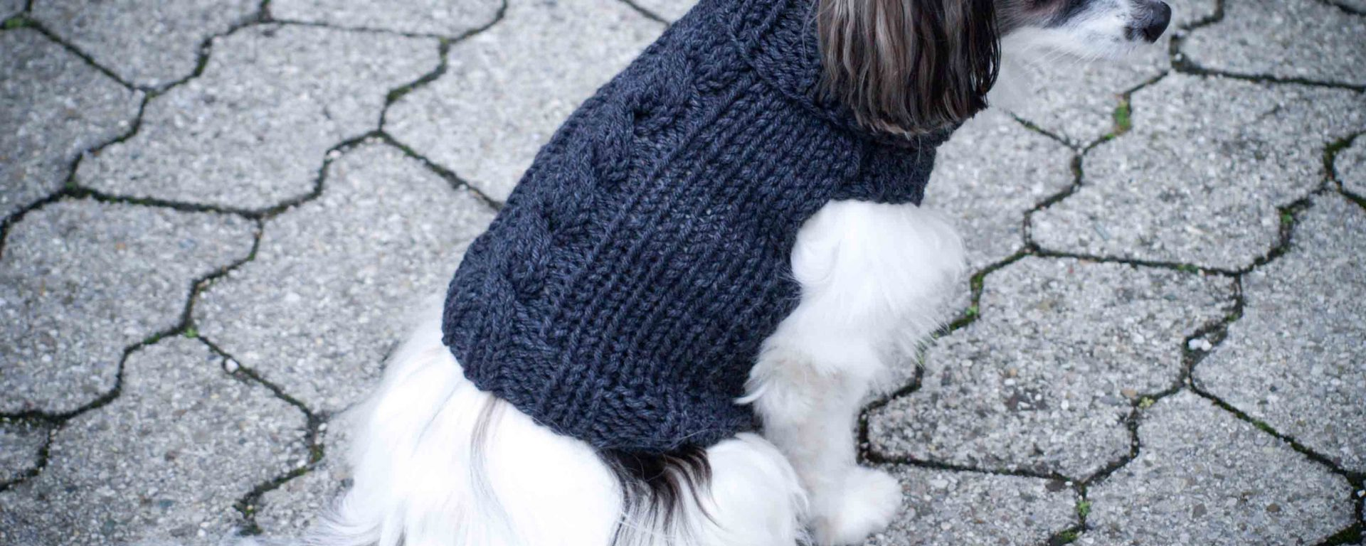 hundepullover stricken